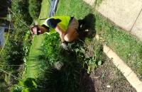 weedinggarden