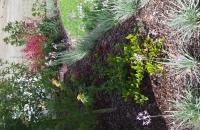 Garden make overs, landscaping