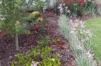 new Cottage Garden2
