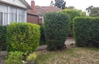 Neater hedge,plants 1