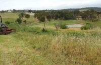 Cutting-overgrown-paddocks