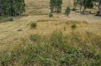 Large-area-overgrown