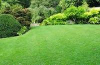 lawn_img1